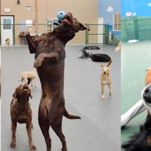 Top Benefits of Sending Your Dog To Dog Daycare San Marcos