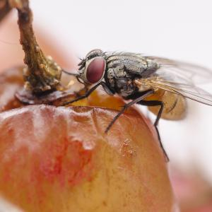 Do you know what areas of your house are preferred by fruit flies? Let's find out here